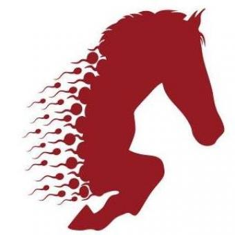 Logo for Stallion AI Services